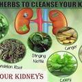 Kidney and herb 1