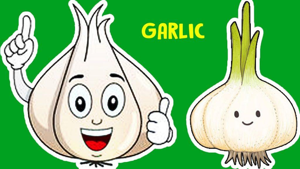 Medicinal value of garlic 1 1024x576